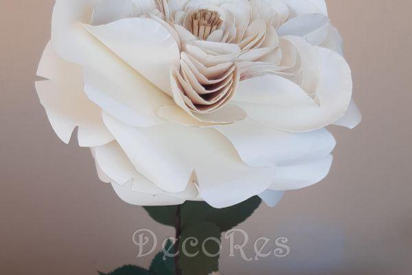 english-rose-white8ECC3730-4DC1-DC7F-7A4B-C4EFB9F972D5.jpg