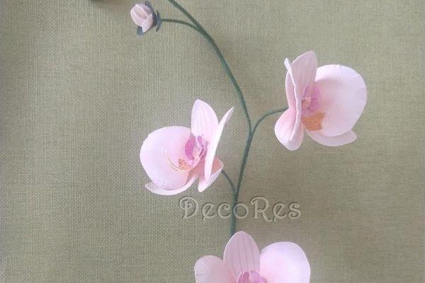 orchideaC6A81F4C-C0A8-B907-27D3-30D51CA75ECB.jpg