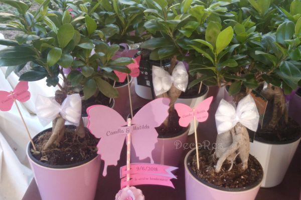 battesimo-bomboniera-bonsai-2BA96C3B5-8768-E71C-697D-95ED420D02BC.jpg