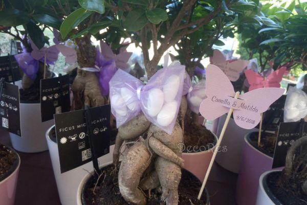 battesimo-bomboniera-bonsai5A0323D3-5C69-8D73-D40E-925CEBE4209E.jpg
